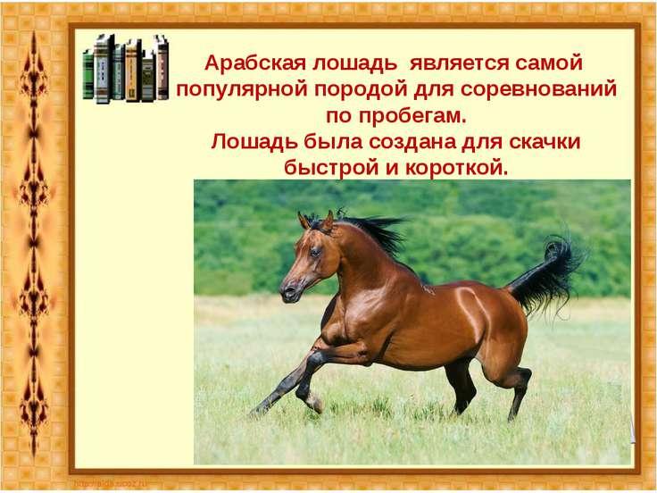 Арабская лошадь является самой популярной породой для соревнований по пробега...