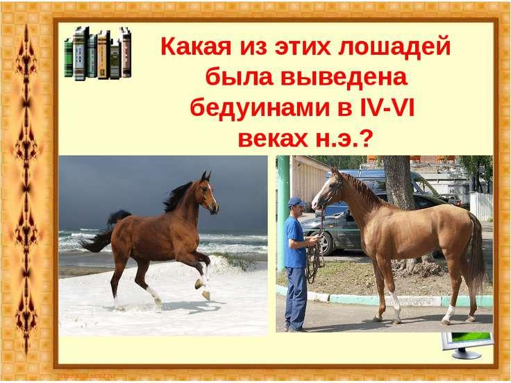 Какая из этих лошадей была выведена бедуинами в IV-VI веках н.э.?