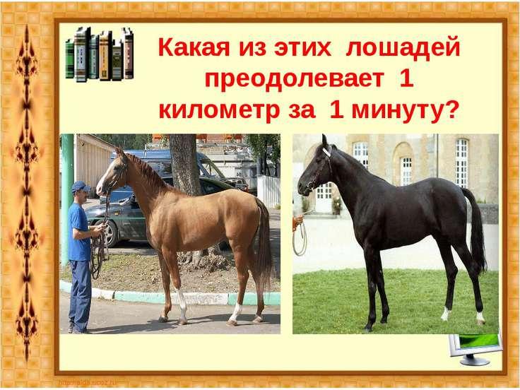 Какая из этих лошадей преодолевает 1 километр за 1 минуту?