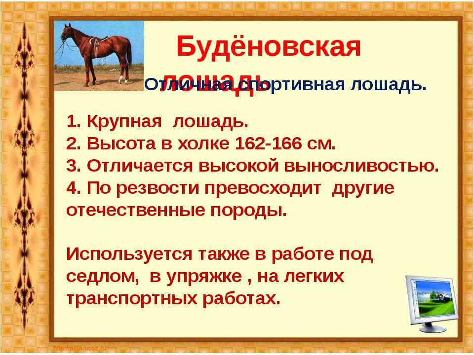 Будёновская лошадь Отличная спортивная лошадь. 1. Крупная лошадь. 2. Высота в...