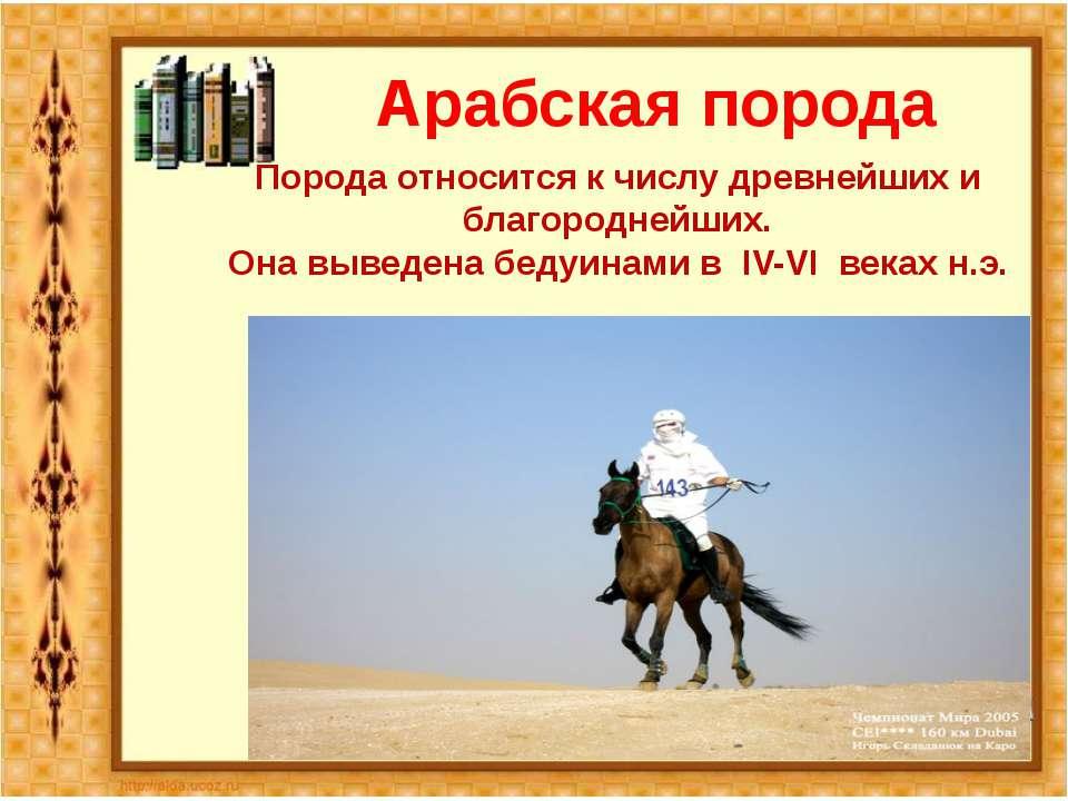 Арабская порода Порода относится к числу древнейших и благороднейших. Она выв...
