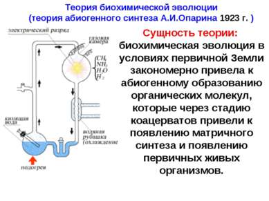 Теория биохимической эволюции (теория абиогенного синтеза А.И.Опарина 1923 г....