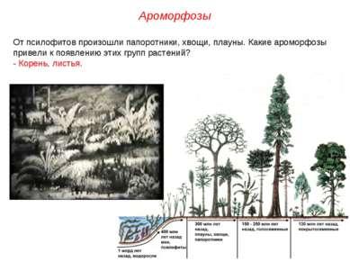 От псилофитов произошли папоротники, хвощи, плауны. Какие ароморфозы привели ...