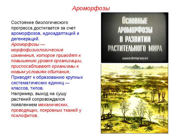 Состояние биологического прогресса достигается за счет ароморфозов, идиоадапт...