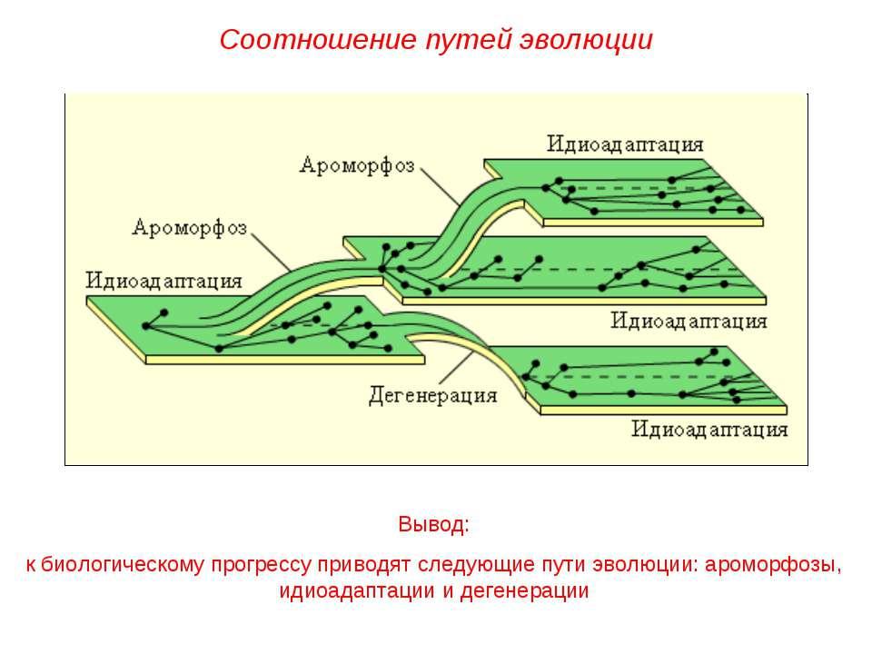 Вывод: к биологическому прогрессу приводят следующие пути эволюции: ароморфоз...