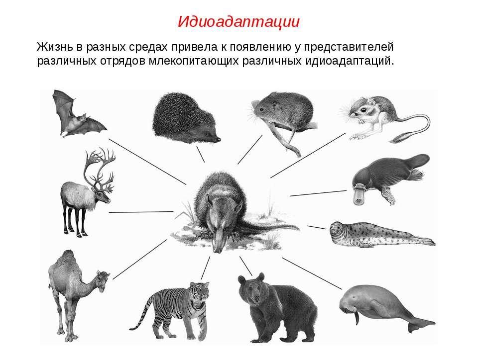 Жизнь в разных средах привела к появлению у представителей различных отрядов ...
