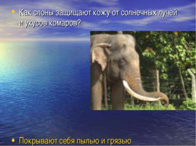 Как слоны защищают кожу от солнечных лучей и укусов комаров? Покрывают себя п...