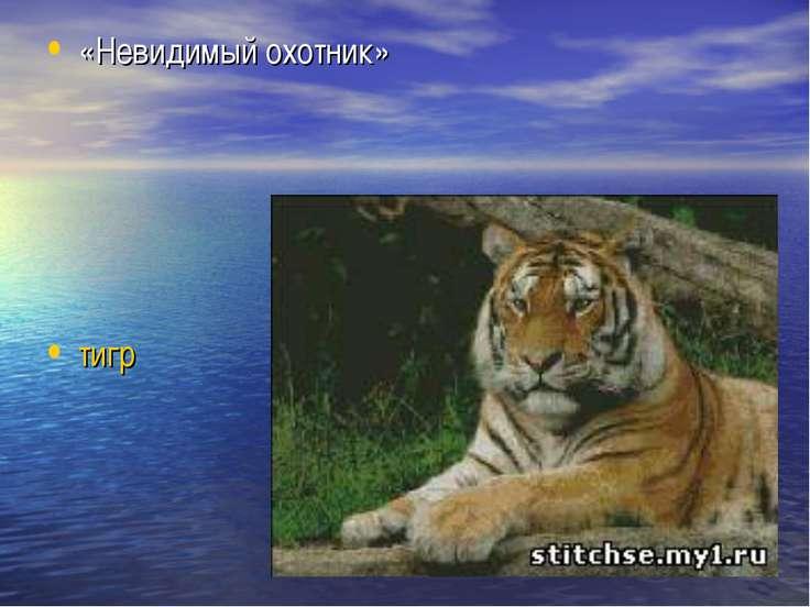 «Невидимый охотник» тигр
