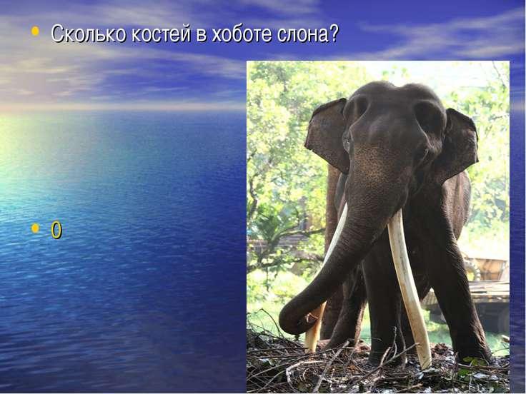 Сколько костей в хоботе слона? 0