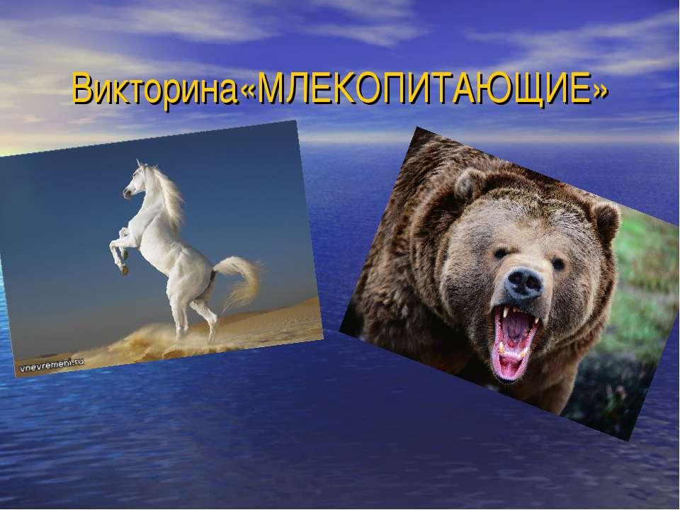 Викторина «МЛЕКОПИТАЮЩИЕ»
