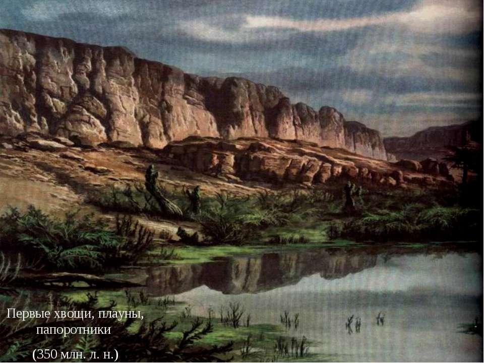 Первые хвощи, плауны, папоротники (350 млн. л. н.)
