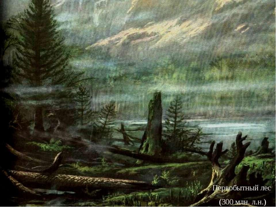 Первобытный лес (300 млн. л.н.)