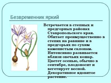 Безвременник яркий Встречается в степных и предгорных районах Ставропольского...