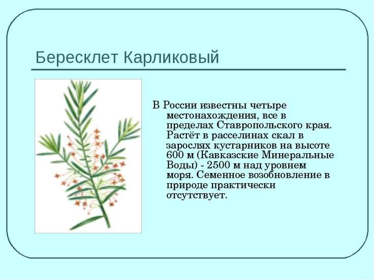Бересклет Карликовый В России известны четыре местонахождения, все в пределах...