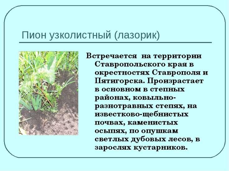 Пион узколистный (лазорик) Встречается на территории Ставропольского края в о...