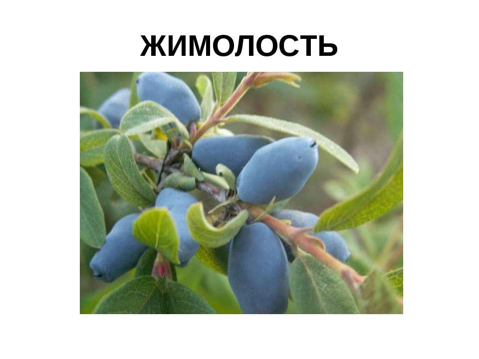 ЖИМОЛОСТЬ