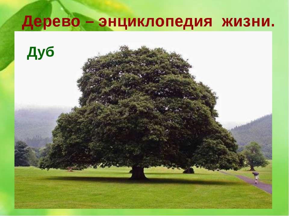 Дерево – энциклопедия жизни. 10. Это дерево считается священным для многих на...