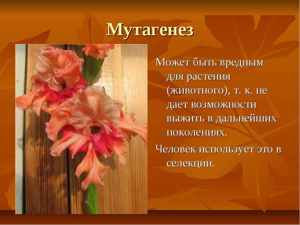 Мутагенез Может быть вредным для растения (животного), т. к. не дает возможно...