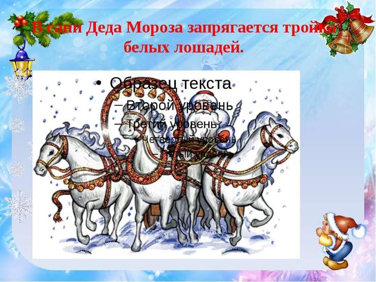В сани Деда Мороза запрягается тройка белых лошадей.