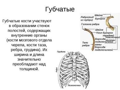 Губчатые Губчатые кости участвуют в образовании стенок полостей, содержащих в...