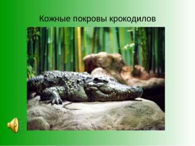 Кожные покровы крокодилов