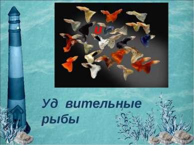 Уд вительные рыбы и