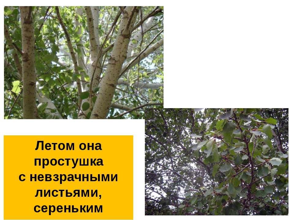 Летом она простушка с невзрачными листьями, сереньким стволом
