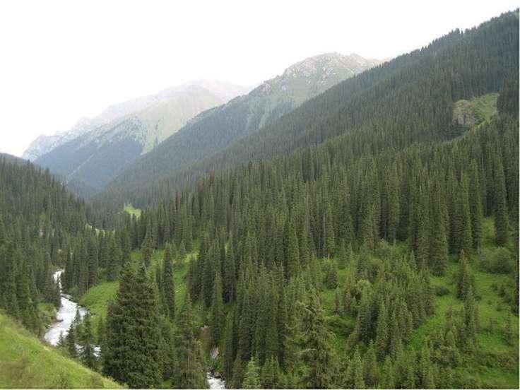 А на теневых, северных склонах, где больше влаги, растут пышные леса