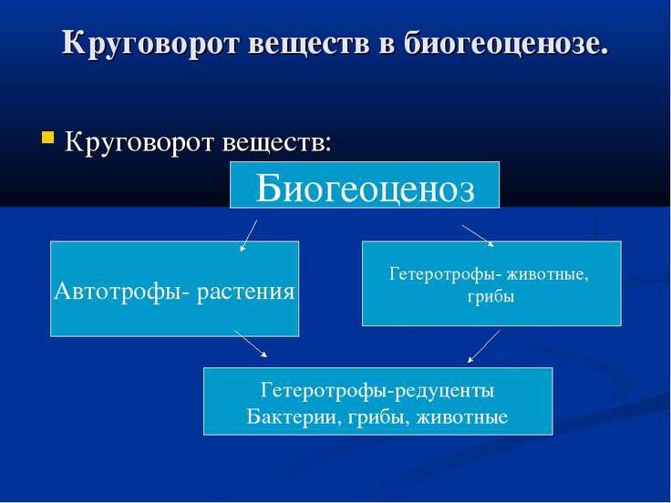 Круговорот веществ в биогеоценозе. Круговорот веществ: Автотрофы- растения Би...