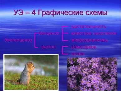 УЭ – 4 Графические схемы растительность биоценоз животное население биогеоцен...