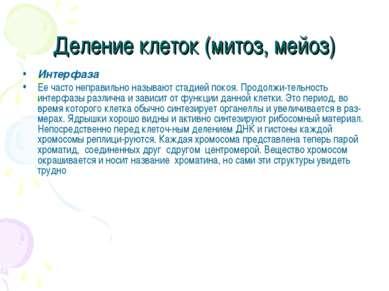Деление клеток (митоз, мейоз) Интерфаза Ее часто неправильно называют стадией...