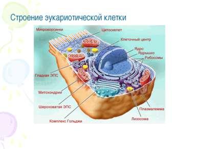Строение эукариотической клетки