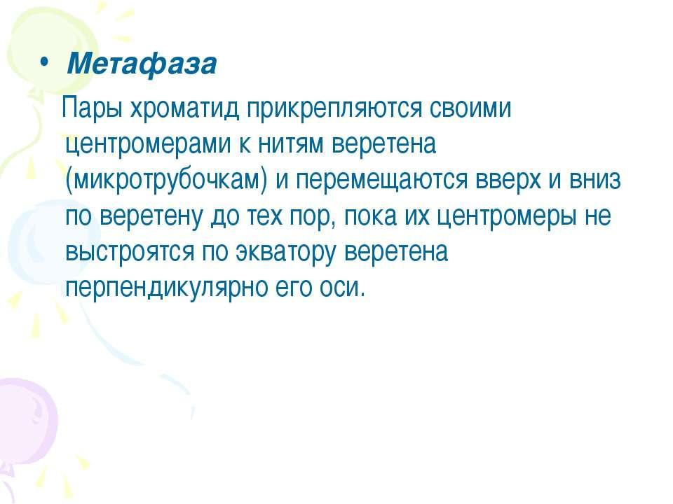 Метафаза Пары хроматид прикрепляются своими центромерами к нитям веретена (ми...