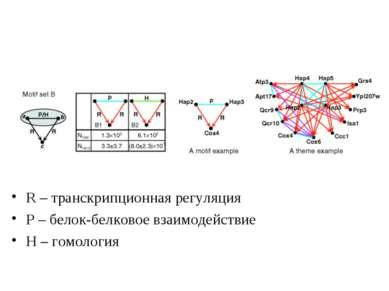 R – транскрипционная регуляция Р – белок-белковое взаимодействие Н – гомология