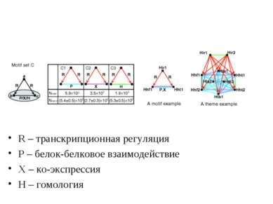 R – транскрипционная регуляция Р – белок-белковое взаимодействие Х – ко-экспр...