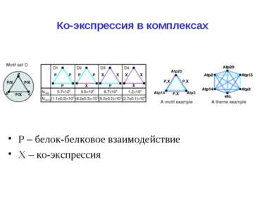 Ко-экспрессия в комплексах Р – белок-белковое взаимодействие Х – ко-экспрессия