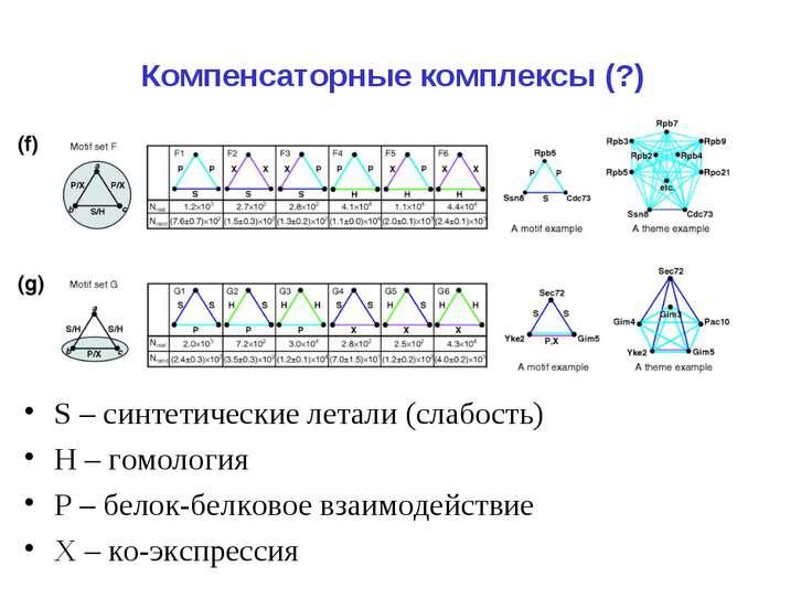 Компенсаторные комплексы (?) S – синтетические летали (слабость) Н – гомологи...