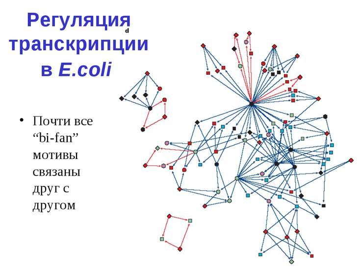 """Регуляция транскрипции в E.coli Почти все """"bi-fan"""" мотивы связаны друг с другом"""