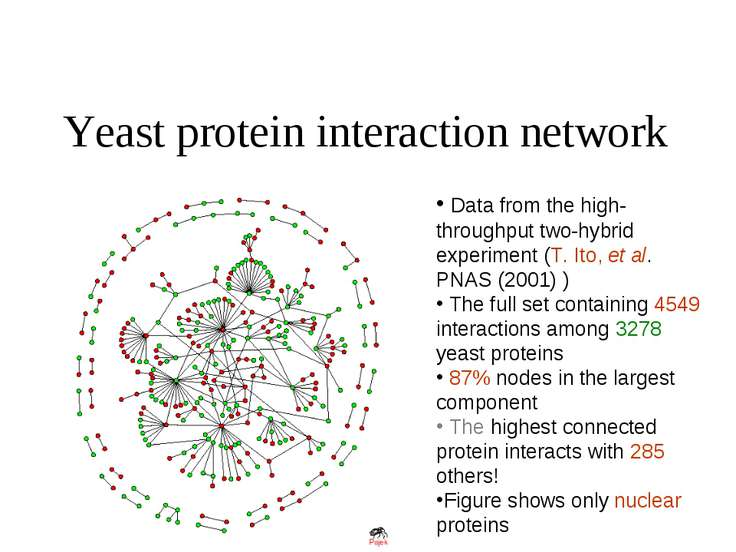Yeast protein interaction network Data from the high-throughput two-hybrid ex...
