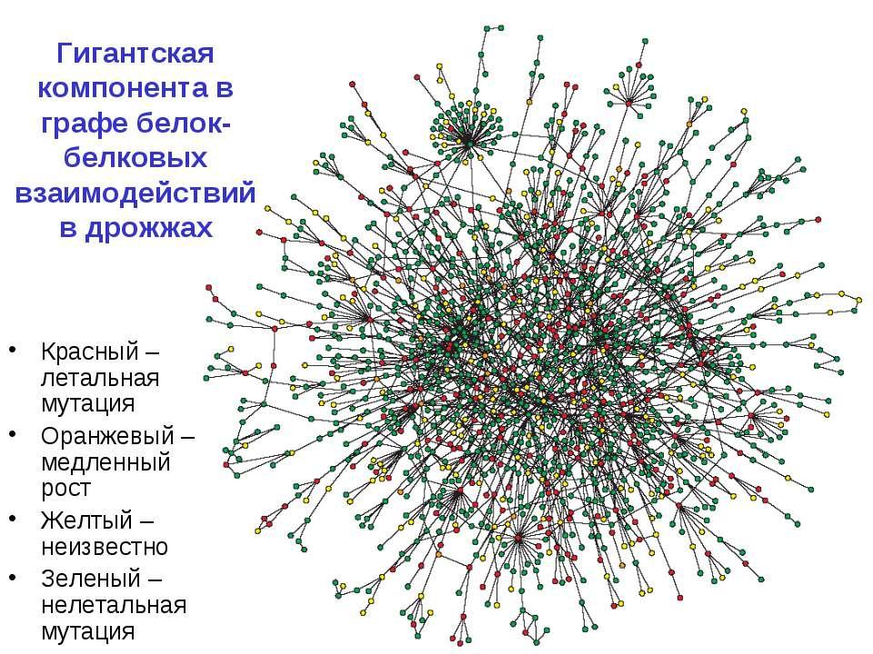 Гигантская компонента в графе белок-белковых взаимодействий в дрожжах Красный...