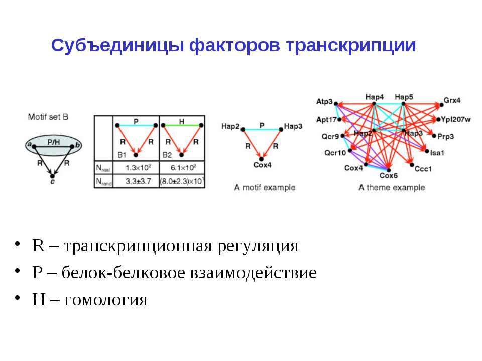 Субъединицы факторов транскрипции R – транскрипционная регуляция Р – белок-бе...