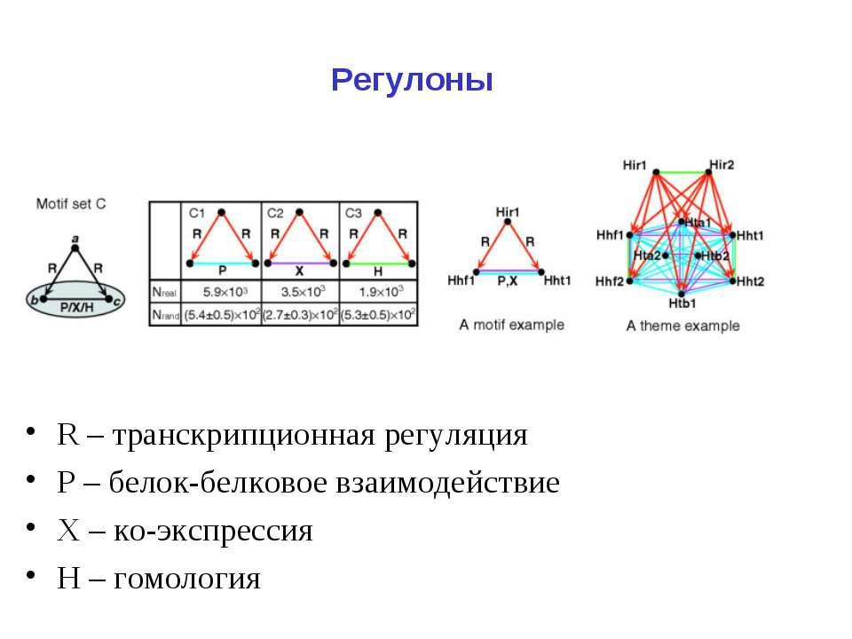 Регулоны R – транскрипционная регуляция Р – белок-белковое взаимодействие Х –...