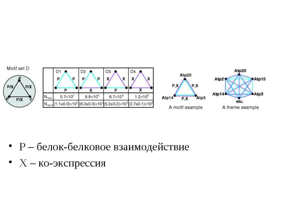 Р – белок-белковое взаимодействие Х – ко-экспрессия