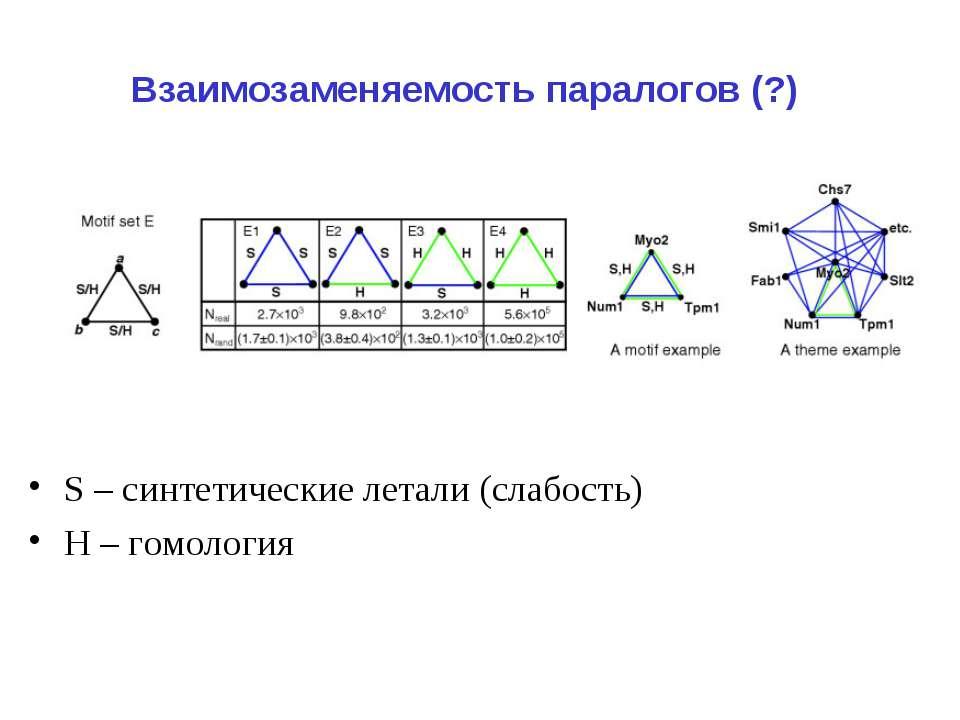 Взаимозаменяемость паралогов (?) S – синтетические летали (слабость) Н – гомо...