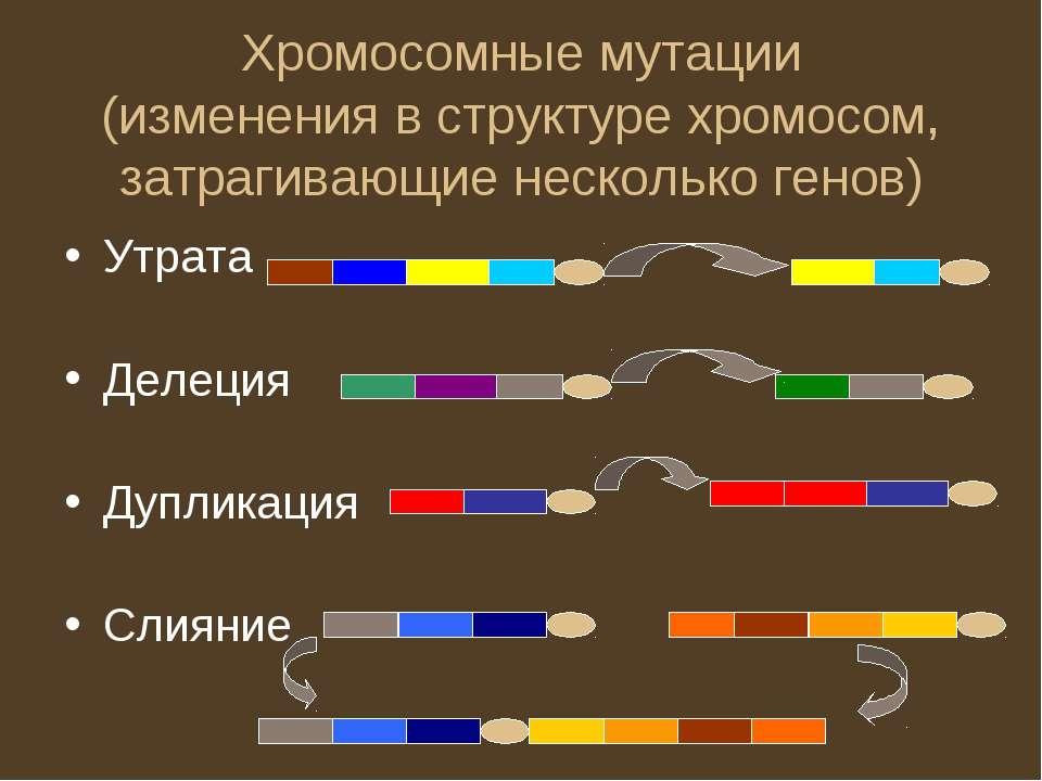 Хромосомные мутации (изменения в структуре хромосом, затрагивающие несколько ...