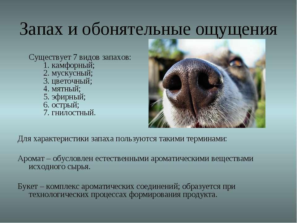 Запах и обонятельные ощущения Существует 7 видов запахов: 1. камфорный; 2. му...