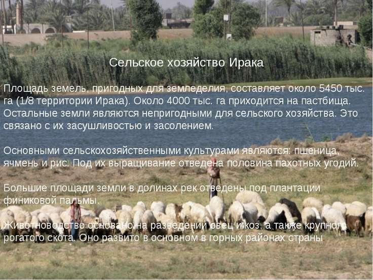 Сельское хозяйство Ирака Площадь земель, пригодных для земледелия, составляет...