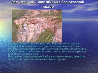 Растительный и животный мир Борнуковской пещеры На склоне к Пьяне в районе бо...