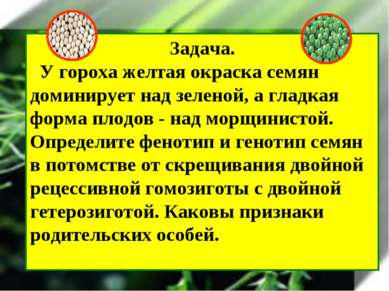 Задача. У гороха желтая окраска семян доминирует над зеленой, а гладкая форма...
