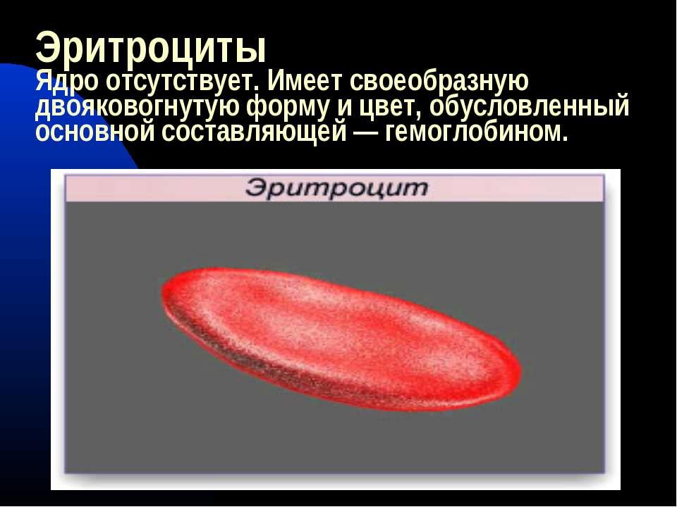 Эритроциты Ядро отсутствует. Имеет своеобразную двояковогнутую форму и цвет, ...